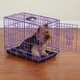 ProSelect Deco Dog Crate SM Purple