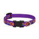 LupinePet Spring Fling Adjust Dog Collar 10-16in
