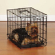 Sure Crate Folding Dog Crate XLarge
