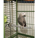 KH Mfg Heated Thermo Bird Perch Large