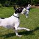 KONG Wubba Friend Dog Toy XLarge