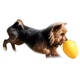 Jolly Pets Jolly Egg Dog Toy Large Yellow