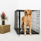 DuraCrate Folding Dog Crate 48Lx30Wx33H