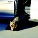 Mr Herzher Smart Dog Ramp Junior