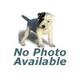 Orange Sun Pet ID Tag Large