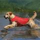 Kurgo Surf n Turf Dog Lifejacket XLarge