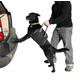 Outward Hound Up and Out Lift Dog Harness