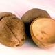 Coconut Half-Shell Bird Toy