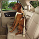 GG Ride Right Classic Dog Car Harness XL KHA