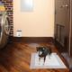 PetSafe Train N Praise Dog Potty Training System
