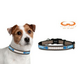 NFL Detroit Lions Reflective Dog Collar LG