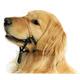 Comfort Trainer Dog Head Halter Size 2 Blue