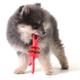 Hugs Pet Jaws Stick Dog Chew Toy