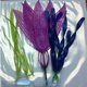 Tetra GloFish Plant Multipack Variety 2