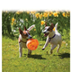KONG Jumbler Ball Dog Toy MD/LG