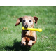 Jolly Pets Jolly Bone Dog Toy 8 inch
