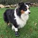 Doggles Black Dog Boots XXSmall