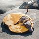 Hurtta Outback Dreamer Dog Sleeping Bag Small