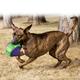 KONG Babbler Dog Toy Small