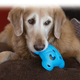 KONG Quest Foragers Dog Toy Flower
