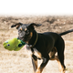 KONG Wiggi Dog Toy Small Parrot