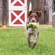 PetSafe Sportsmen Latex Meeze Dog Toy Raccoon