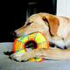 KONG Impact Ring Dog Toy