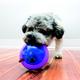 KONG Hopz Ball Dog Toy Small