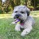 KONG CrunchAir Ball Dog Toy Small