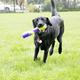 KONG Squeezz Bitz Stick Dog Toy Medium