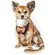 Pet Life Dapperbone Dog Harness/Leash XSmall
