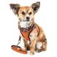 Pet Life Pawsh Dog Harness/Leash XSmall