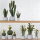 Collection de cactus avec pot par Torre & Tagus