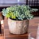 Jardin de plantes dans un pot en ciment par Gino Signature