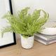 Plante en pot collection «Solaro» par Torre & Tagus