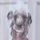 Rideau de douche en tissu «Dog Bath»