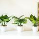 Plantes décoratives collection «Villa» par Torre & Tagus
