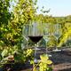 Ensemble de 8 verres à vin Schott Zwiesel«Pure»