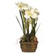 White Triple 25 inch High Amaryllis Flower Arrangement