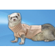 Marshall Ferret Sweater