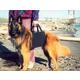 Walkabelly Pet Harness Medium