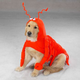 CC Lobster Paws Dog Costume LG