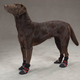 Guardian Gear Fleece Line Dog Boots SM BLU