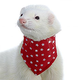 Marshall Ferret Bandana Red