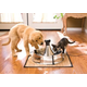 Drinkwell 360 Stainless Steel Pet Water Fountain