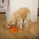 Dog Games Slo-Bowl Coral Style Dog Bowl Orange