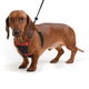Sporn Non Pulling Mesh Dog Harness Large/XL Red