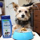 PetSafe Indigo Fresh Dog Dental Sauce Peppermint
