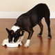 Pet Studio The Control Dog Bowl 56 ounce