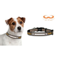 NFL Pittsburgh Steelers Reflective Dog Collar LG
